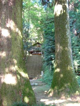 神社前の高木