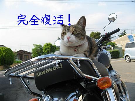 木崎ツーリングクラブ