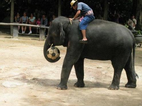 サッカー象1