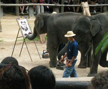 うますぎる象