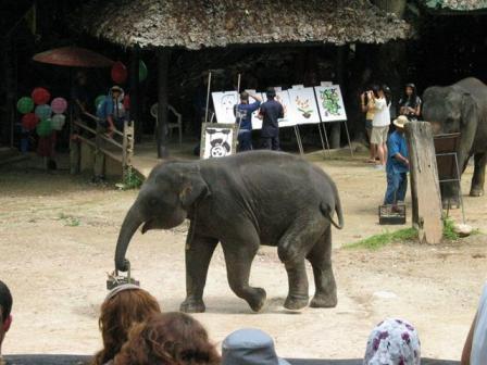 絵の具箱運ぶ象