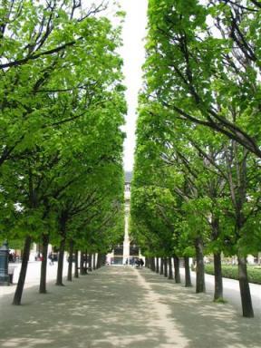 パレロワイヤル公園の並木