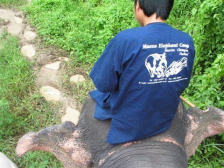 象にのって