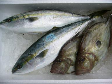 20091230今年最後のお魚便.jpg