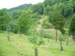 20090521健康の森の谷.jpg