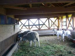 20090521羊小屋の中.jpg
