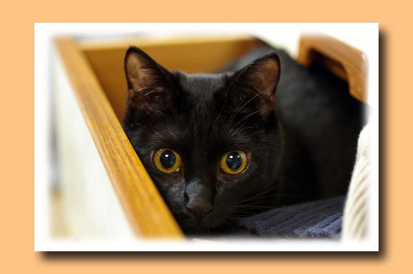 黒猫ルナ♪