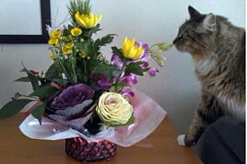 菊の花ってたしか食べられるって聞いたんだけど…