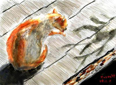 cat_kenta_20080111_2
