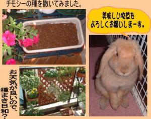 Mikan049s.jpg