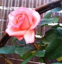 garden016.jpg