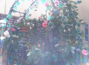 garden013.jpg