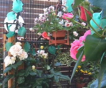 garden015.jpg