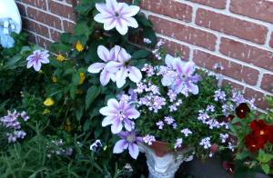 garden019.jpg