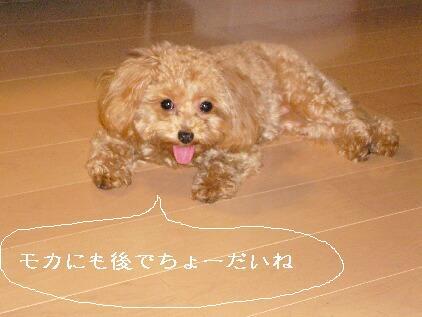 yuzutya 002.jpg