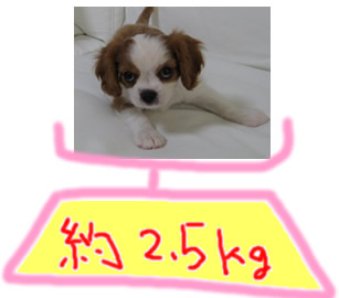 体重071221