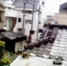 屋根の上にトゥさん