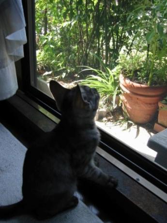 お庭を見つめるサイ君