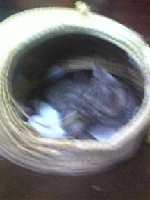 鳥の巣状態の猫ぐら