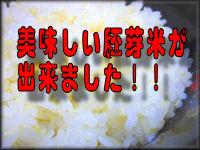 美味しいこしひかりの胚芽米ができた!