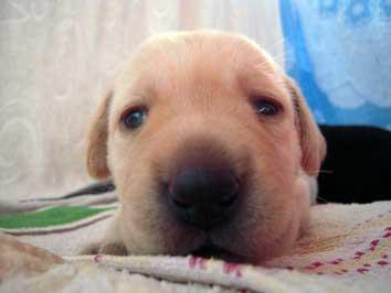 puppys_1128_22.jpg