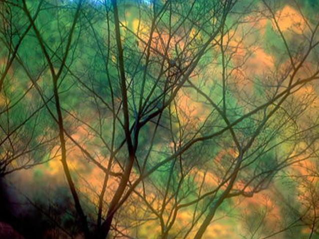 morningforest