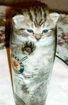 catinglass