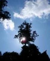 樹下宮と日