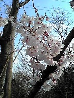 桜2010-2