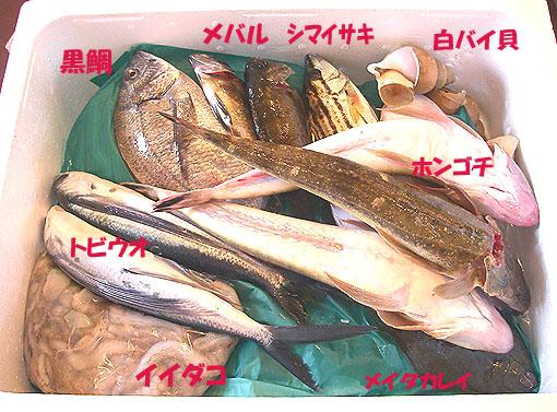 6月5日の魚えーっセット.jpg