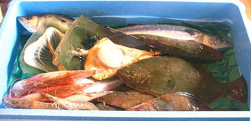 瀬戸内海の魚種って、何種類位あるのでしょうかね.jpg