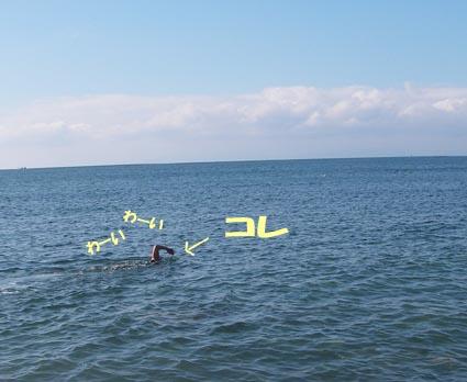 浜辺にはフグ、鯵や石鯛の子 ちょっと沖に行くと小魚の群れもいました.jpg
