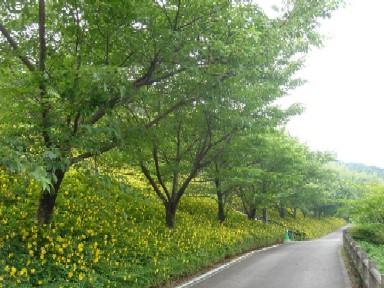 2009/6/14松川湖(奥野ダム)