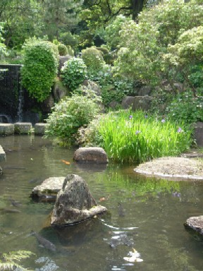 2009/5/25丸山公園 004.jpg