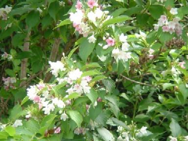 2009/5/25丸山公園 008.jpg