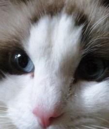 猫イメージ10 海.JPG