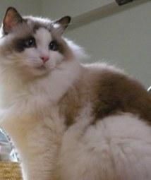 猫イメージ 8海.JPG