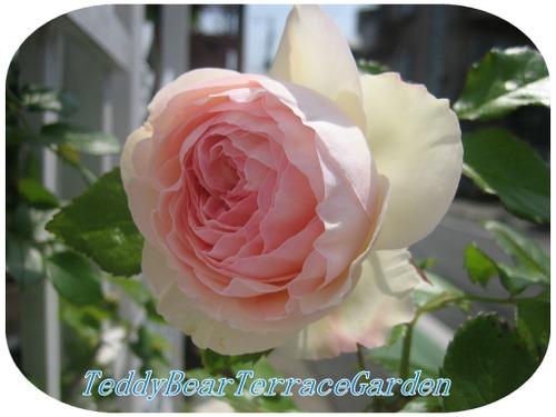 2009.4 012garden-1.jpg