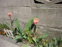 2009.3 092-1.jpg