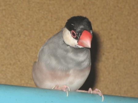 鳥さん 053.jpg