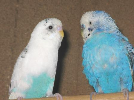 鳥さん 035.jpg