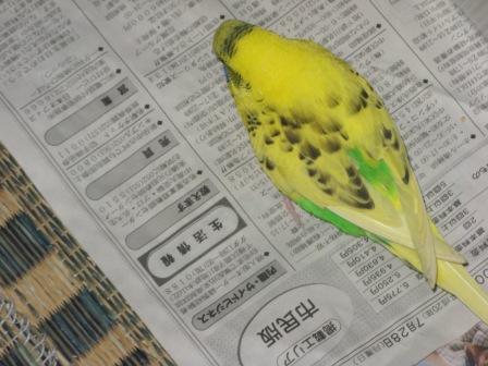 鳥さん 051.jpg