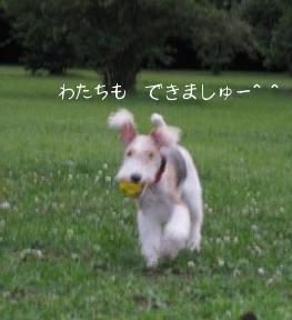 080708_とれまちたー!