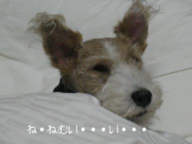 090128_眠い~!