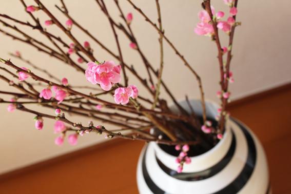 桃の花2012-a.jpg