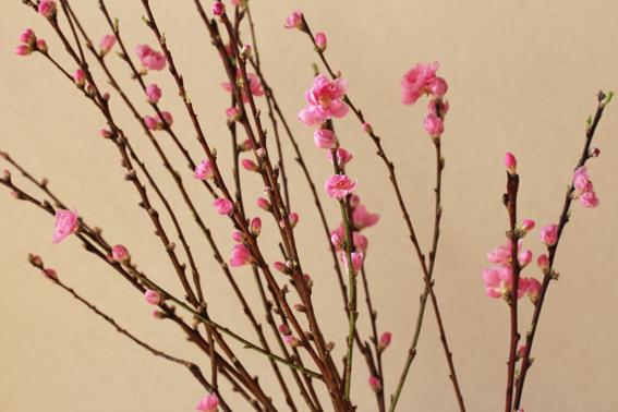 桃の花2012-c.jpg