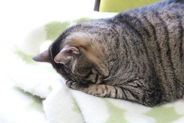 頭をかかえたうちのネコ・猫・ねこ.jpg