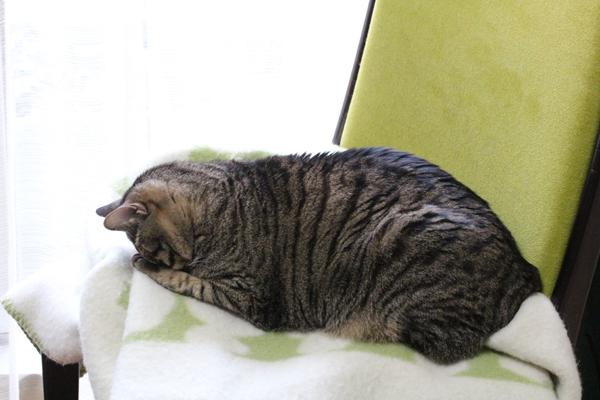 頭をかかえたうちのネコ・猫・ねこ1.jpg