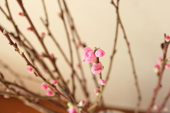 桃の花5.jpg