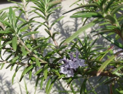 庭で・・1.JPG